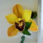 Cocarda din orhidee si iedera